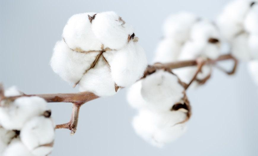 El poder del algodón
