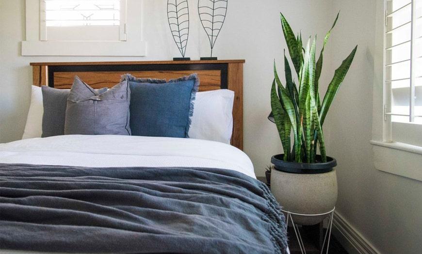 Estas son las plantas que te harán dormir mejor